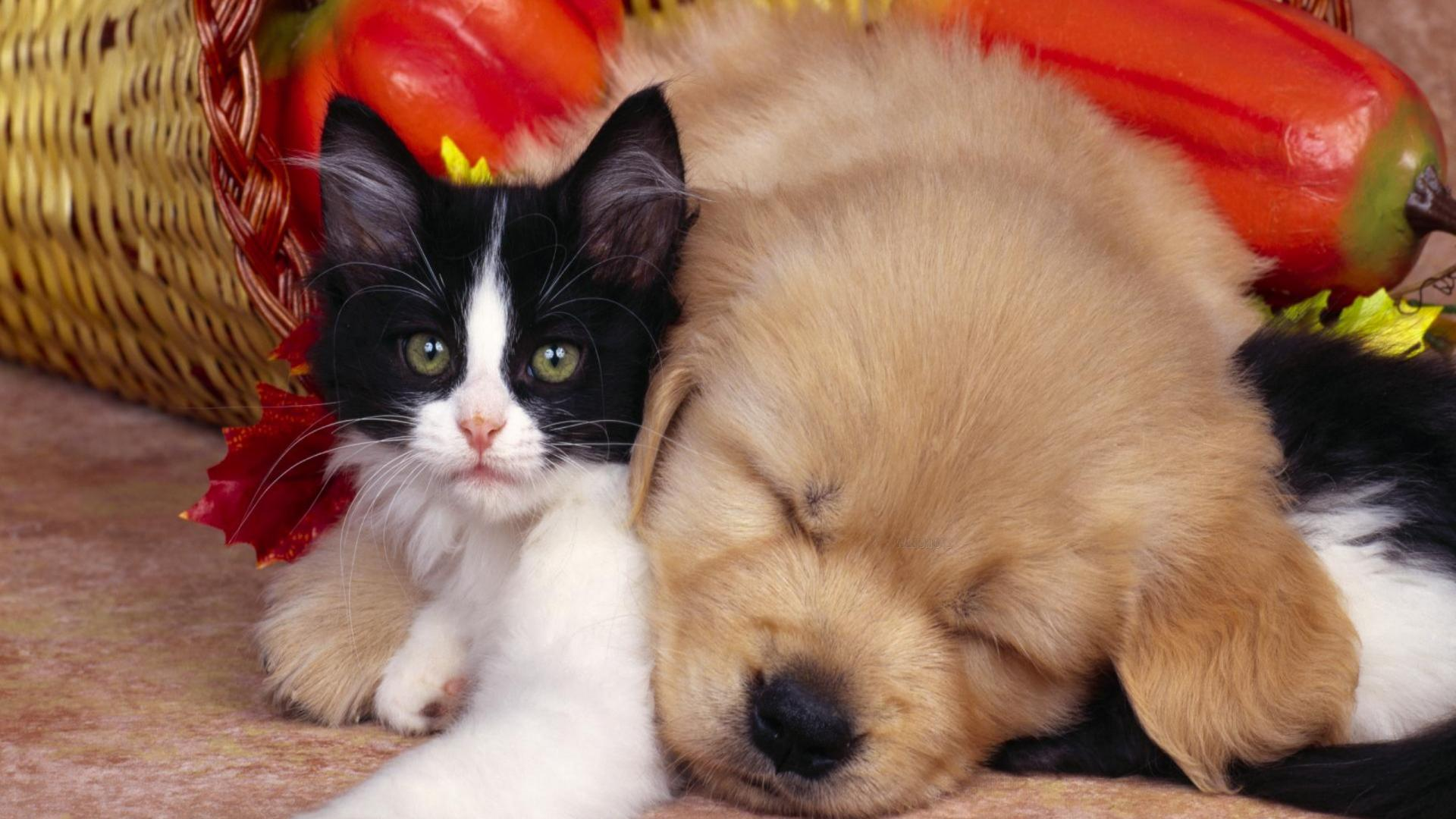 cat-and-dog-friendship